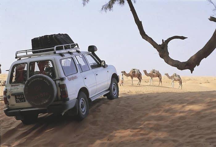 Сафари в тунисе