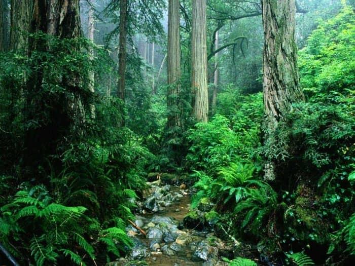Тропический лес Южной Амазонки